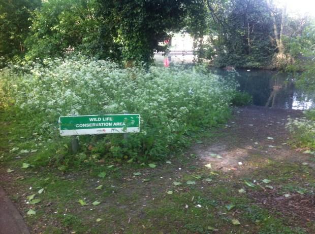 pymmes-park-edmonton-jezioro-park-w-londynie-przyroda (2)