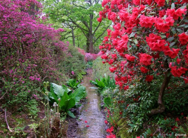 isabella-plantation-richmond-park-londyn-natura-06