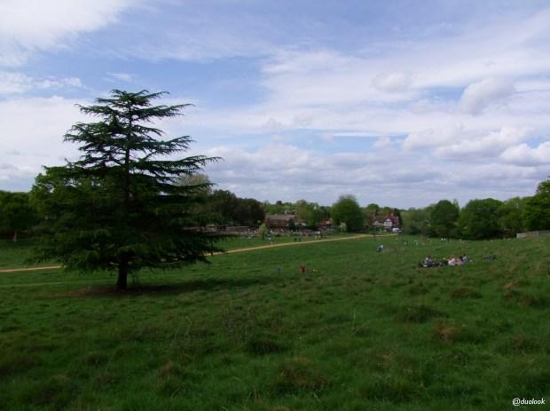 richmond-park-petersham-londyn-natura-zwiedzanie-atrakcje-03