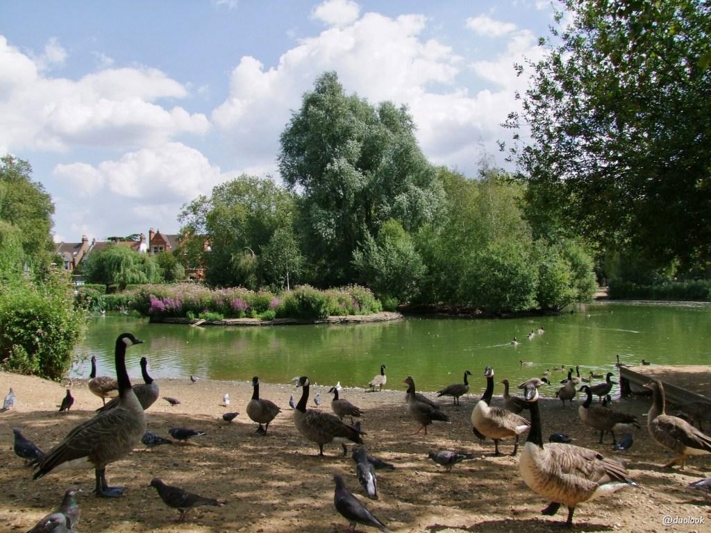 Lokalny park w Londynie