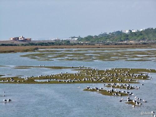 ptaki-birdwatching-algarve-quinta-do-lago-portuglia-20