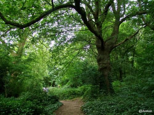 hampstead-heath-londyn-lasy