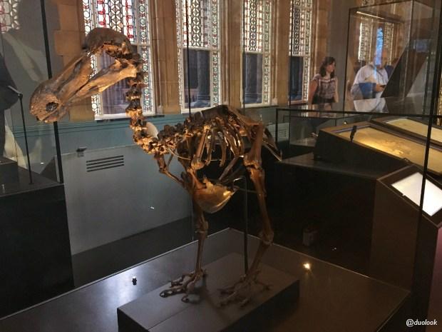 londyn-muzeum-historii-naturalnej-ptak-dodo