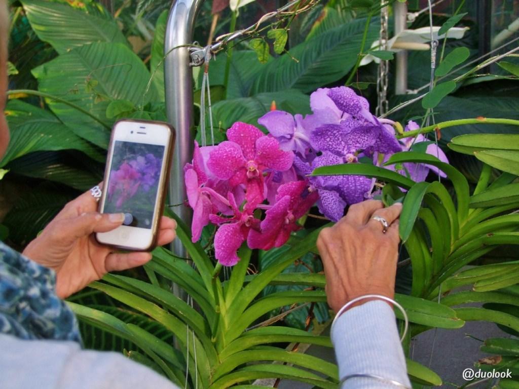 storczyki orchidea londyn zdjęcia