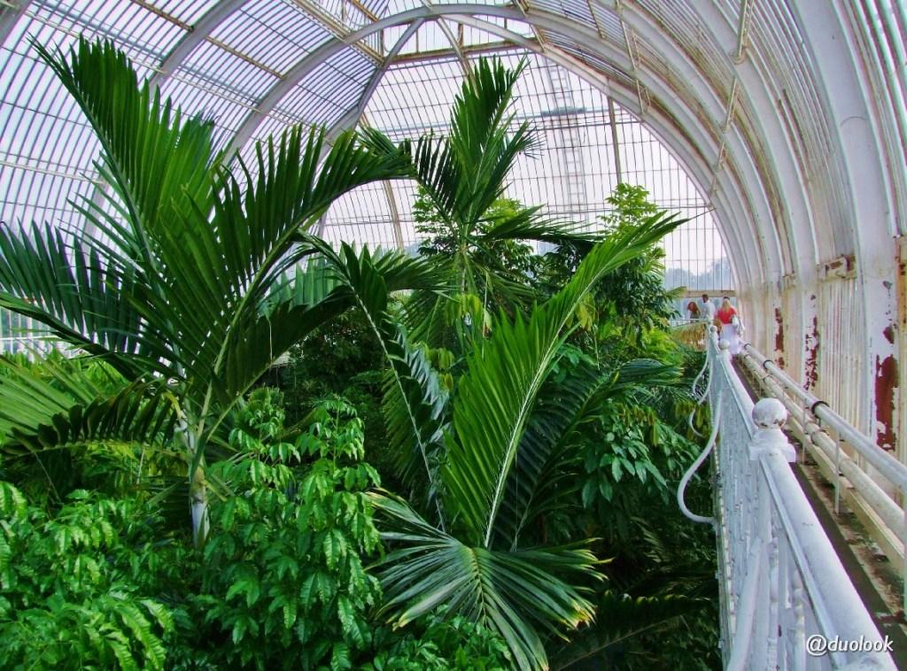 Londyn tropikalny las palmiarnia kew gardens