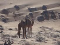 ob_2347cf_wahiba-sand-16