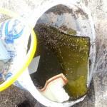 sharp sea glass web size by Jenifer Joy Madden