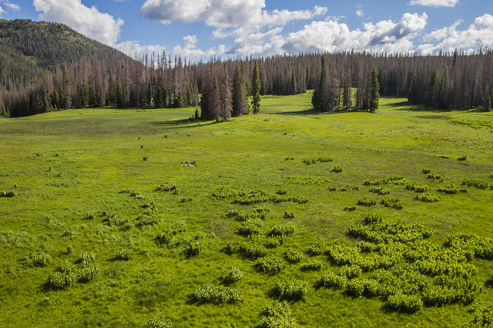 View of the meadow and Spruce covered knoll where the proposed development site will be.