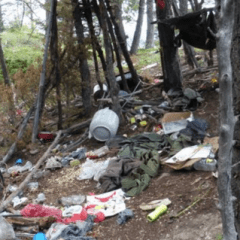 Found: 13,450 plants from illegal pot grow operation in San Isabel National Forest