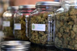 Marijuana jars at the West Coast Collective, a dispensary in Los Angeles (Image: Frederic J. Brown/AFP/Getty Images)