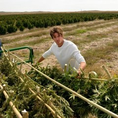 Business is booming: North American marijuana sales up 30 percent in 2016