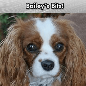 bailey's bits homes in durango