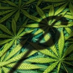3 Reasons Marijuana Stocks Are Soaring, Once Again