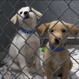 BARK & WINE! Annual Fund-Raiser Supports Shelter