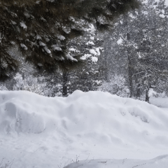 Pagosa Winter Wonderland – Vacation Rentals