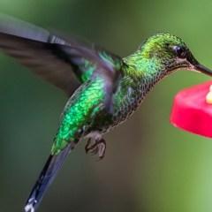 Homemade Hummingbird Food: 3 Ways to Save Time & Money