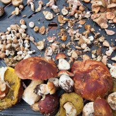 Mushroom & Wine Festival presented by Vectra Bank
