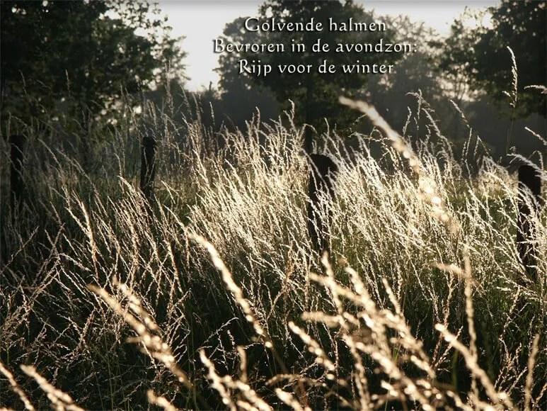 Haikus haikus en nog eens haikus  Durf te