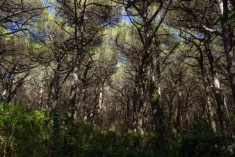 पिसावा के जंगल,उत्तर प्रदेश [Pisawa Forest]