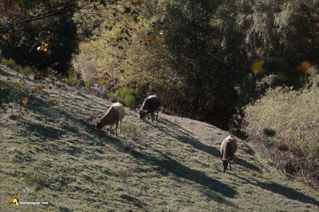 Durius Aquae: Valle del Fasgarón