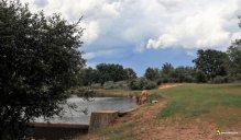Chapuzón en el Valderaduey con tormenta (foto Almu)