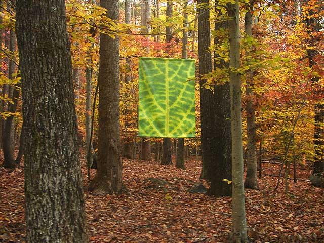 green leaf in fall