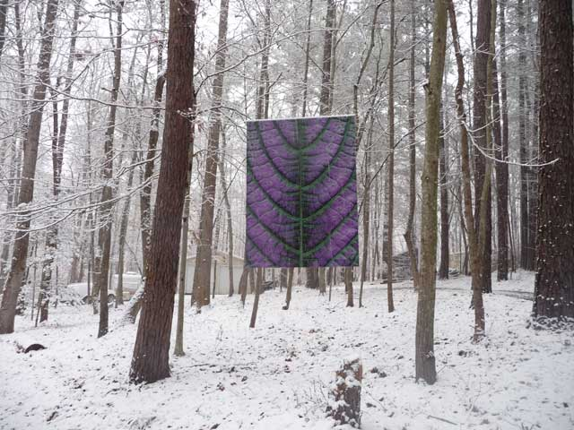 Persian Shield in winter