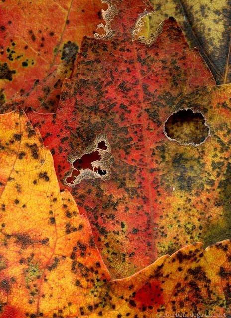 Leaves After de Kooning (Willem)