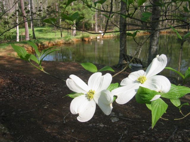 Frog Pond in Spring