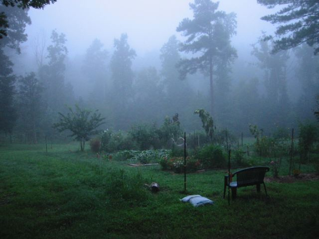 Summer Fog and the Garden