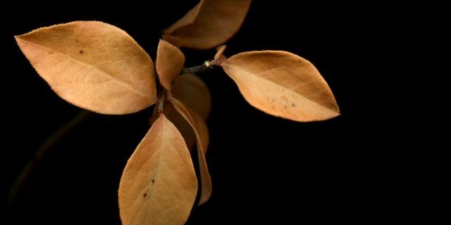 Orange Leaves
