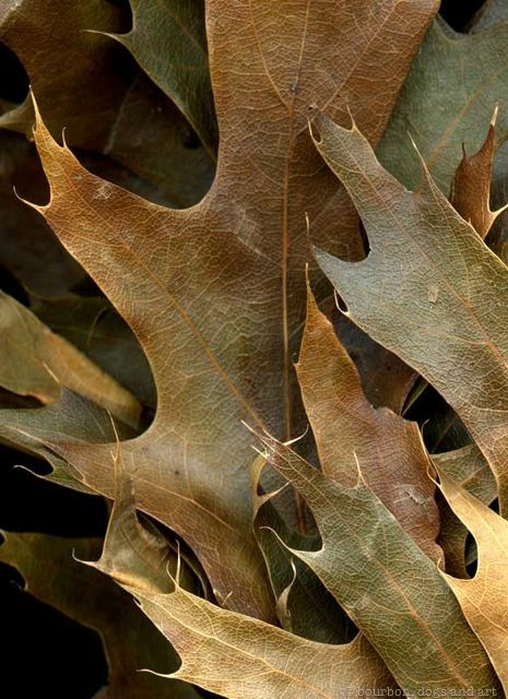 Leaves After Orozco