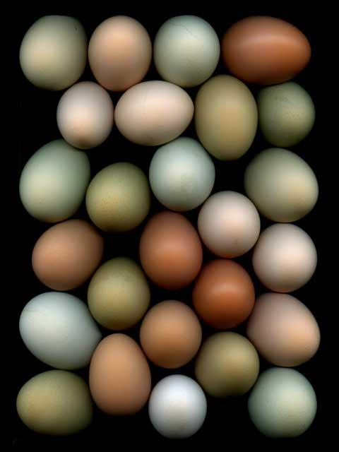 Eggs #4