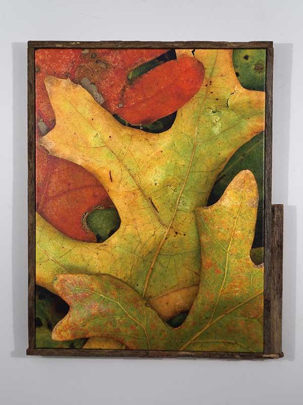 Leaves After Arp (framed)