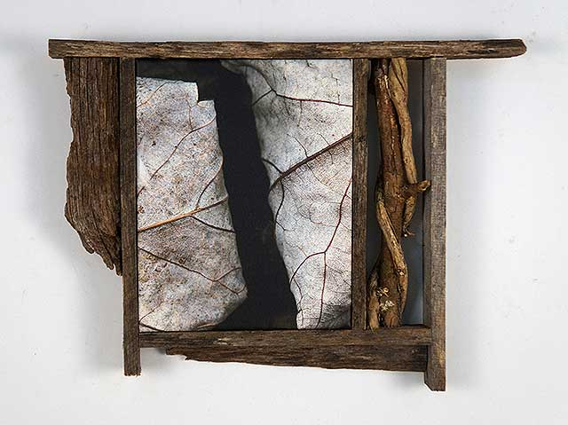 Leaves After Walker (framed)