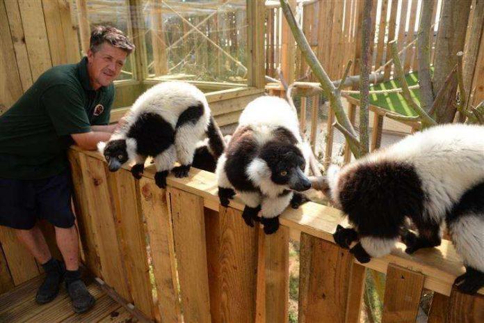 英小型動物園遊客大減園方:動物與其餓死不如安樂死| 新華僑網