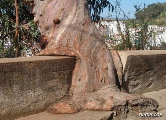Trees  Dusky's Wonders