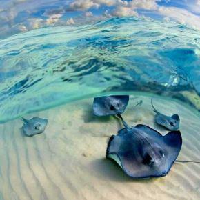 denizveozgurluk