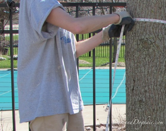 measure the tree trunk