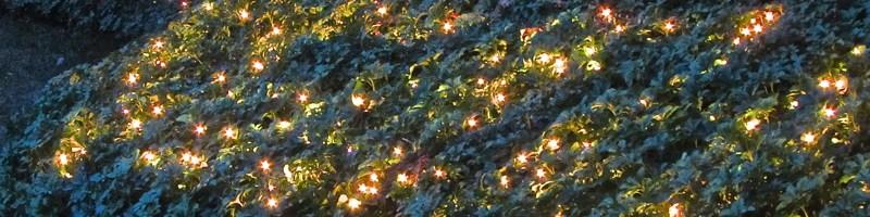 dustanddoghair-garden-lights