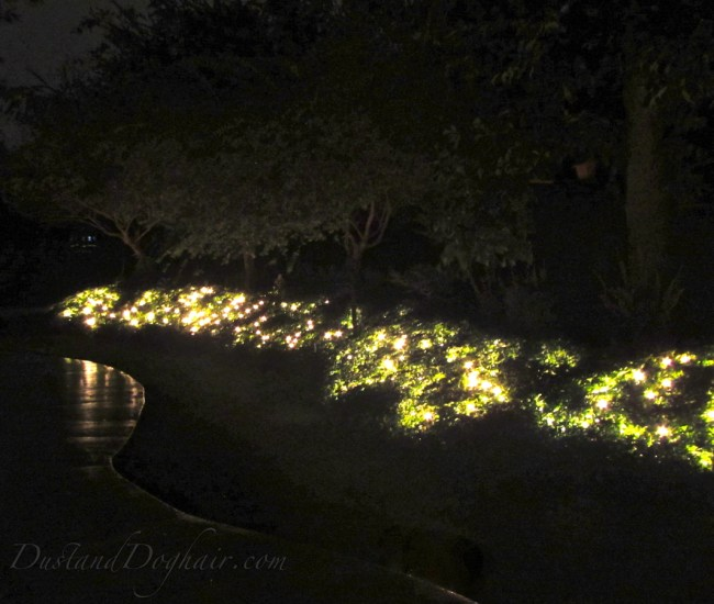 make your garden glow with string lights