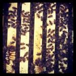 Warre Hive, Top Bar Hive, Honeybees, Bees, Beekeeping