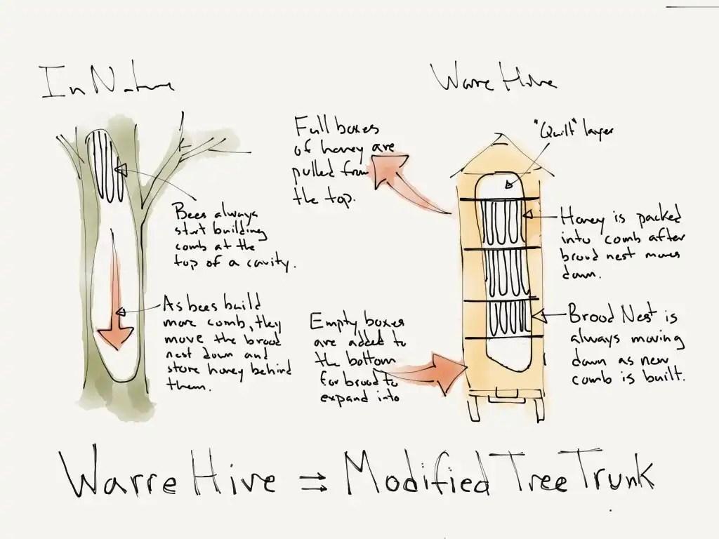 top bar hive pdf plans