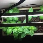 Dustin Bajer, DIY Aquaponics T5 Lighting