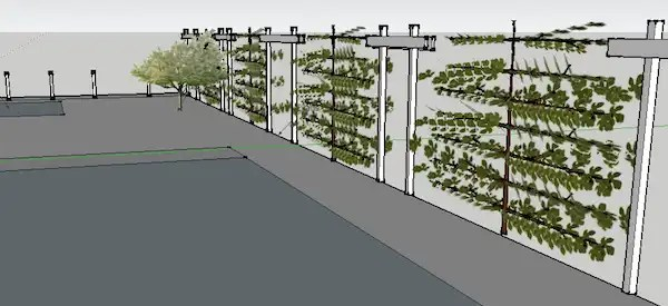 SketchUp model of espalier fruit trees trained along a fence in Edmonton, Alberta.
