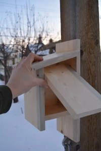 This Alberta Birdhouse has a simple hinge made with two galvanised screws set into a pre-drilled hole allows for quick and easy clean out.