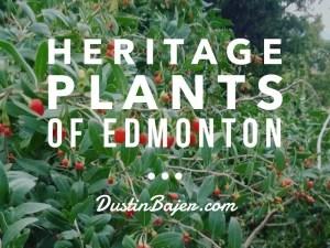 Heritage Plants of Edmonton, Heritage Trees