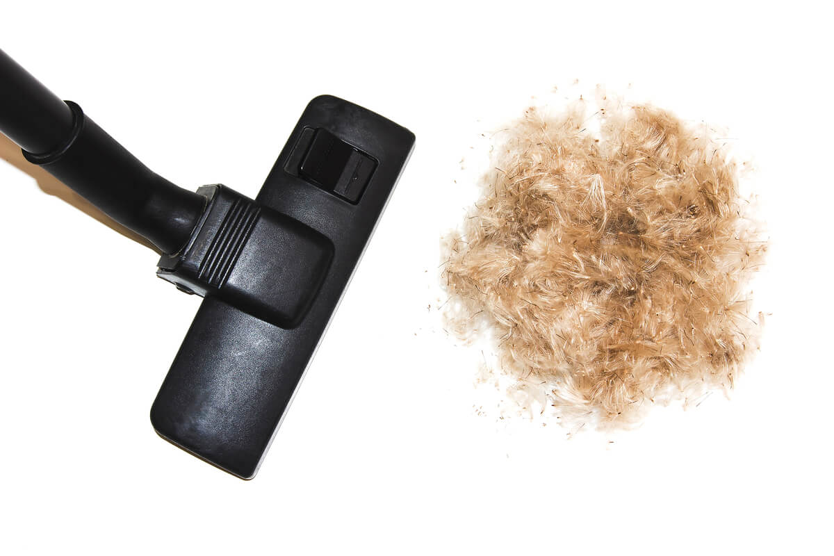 Best Cordless Vacuum for Pet Hair - The Top 10 Picks