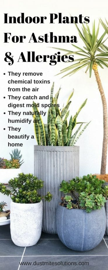 7 Best Indoor Plants for Asthma Allergy Sufferers and ...