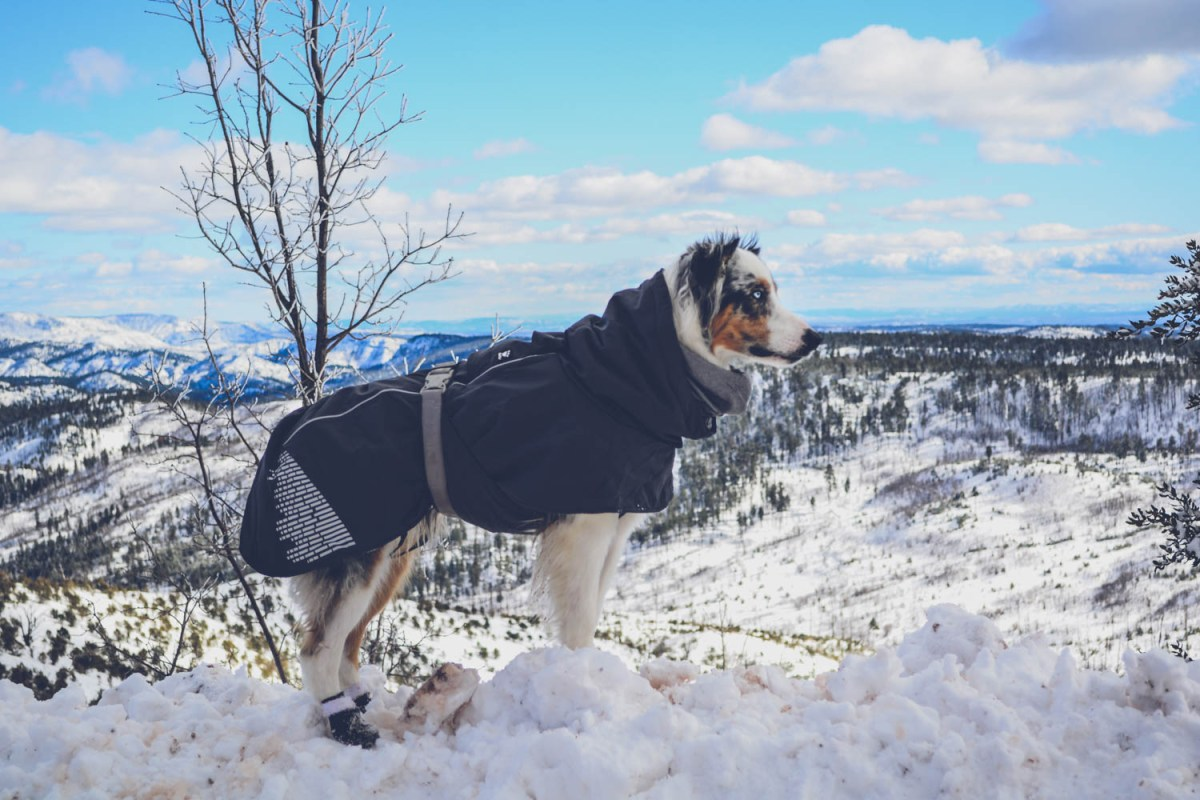 Protect your dog from the cold with the Hurtta Extreme Warmer